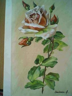 Picturi cu flori  boboci de trandafir cu roua