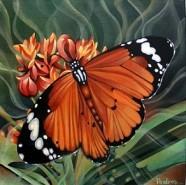 Picturi cu flori Fluturele singuratic