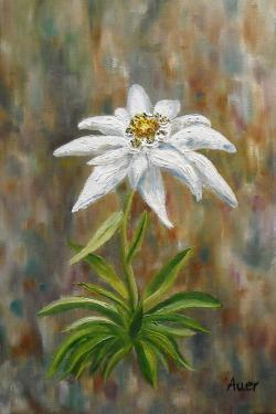 Picturi cu flori Floare de colt 2