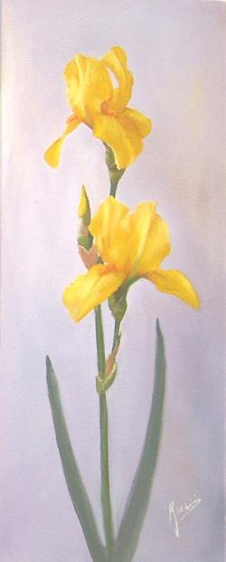 Picturi cu flori Iris Galbeni