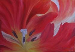 Picturi cu flori Inside a tulip