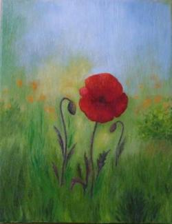 Picturi cu flori Macul inflorit