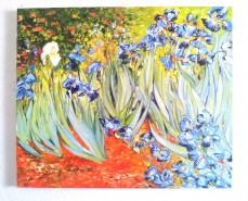 Picturi cu flori Irisii