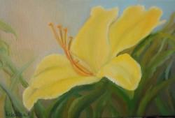 Picturi cu flori Crin galben