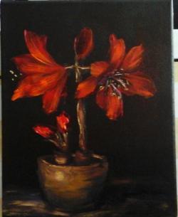 Picturi cu flori Amarillys