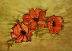 Picturi cu flori Maci , dansand in soare