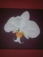 Picturi cu flori Orhidee