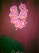 Picturi cu flori Orhidee 2