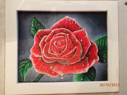 Picturi cu flori Trandafirul rosu roua
