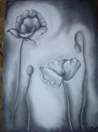 Picturi cu flori Macii