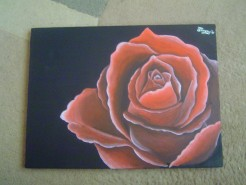 Picturi cu flori Trandafirul