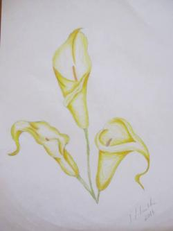 Picturi cu flori Flori in creion 2