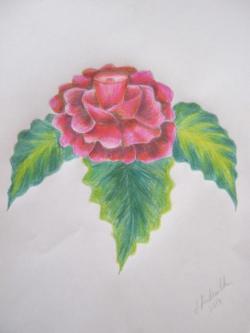 Picturi cu flori Flori in creion 5