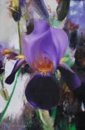 Picturi cu flori Lumina irisului