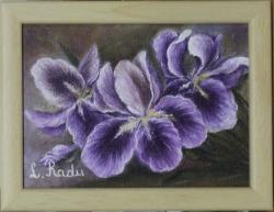 Picturi cu flori Iris (cu rama)