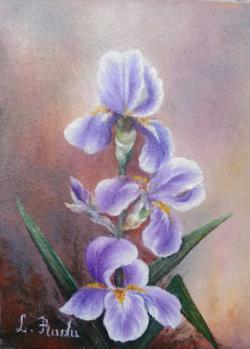 Picturi cu flori niste irisi