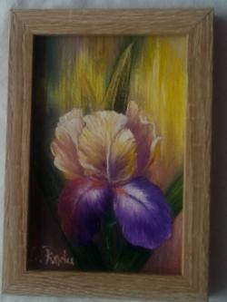 Picturi cu flori O floare de iris