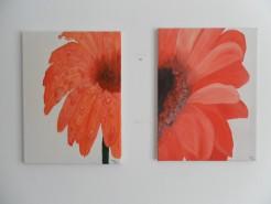 Picturi cu flori Gerbera