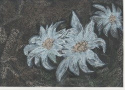 Picturi cu flori Floare de colt