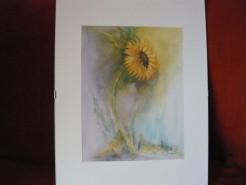 Picturi cu flori Timiditate