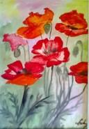 Picturi cu flori Maci 3