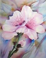 Picturi cu flori Flori de cais -  mireasma primaverii