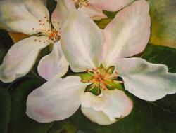 Picturi cu flori florile de mar