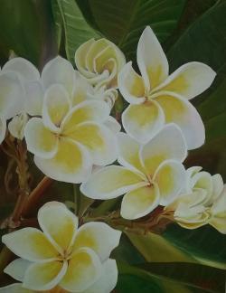 Picturi cu flori hawaiian plumerias