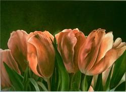 Picturi cu flori Lalele 2