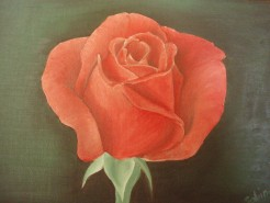 Picturi cu flori Trandafir