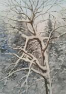 Picturi de iarna Prima ninsoare