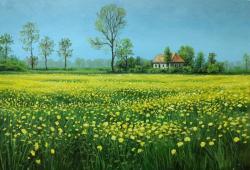 Picturi de primavara camp cu flori galbene E.S. 2017