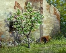 Picturi de primavara Primavara printre ruine