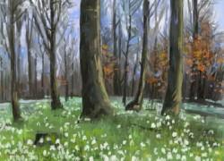 Picturi de primavara Ghiocei in padure