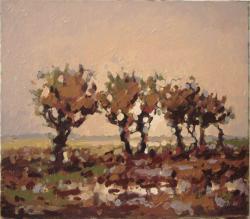 Picturi de toamna dupa ploaie1