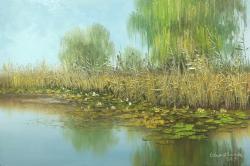 Picturi de vara de prin delta 2017