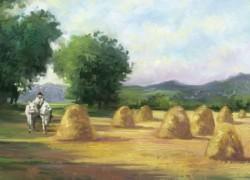 Picturi de vara Capite de paie in camp