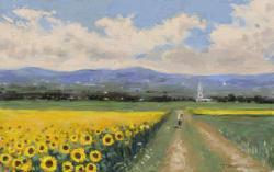 Picturi de vara lanuri de floarea soarelui