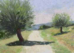 Picturi de vara miezul zilei