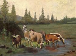 Picturi de vara peisaj de vara cu vite la adapat