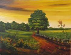 Picturi de vara Stejar in apus