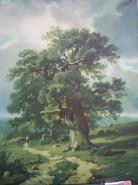 Picturi de vara Stejarul
