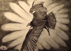 Picturi in creion / carbune Freedom