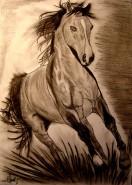 Picturi in creion / carbune Majestic