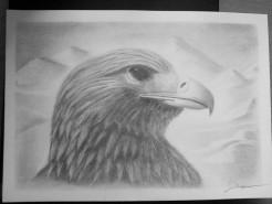 Picturi in creion / carbune Hawk