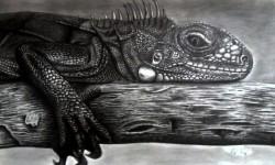 Picturi in creion / carbune Iguanna