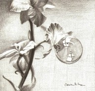 Picturi in creion / carbune Picatura de roua