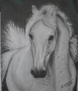 Picturi in creion / carbune Calul balan