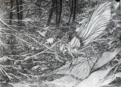 Picturi in creion / carbune Libelula