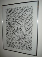 Picturi in creion / carbune Africa leopard